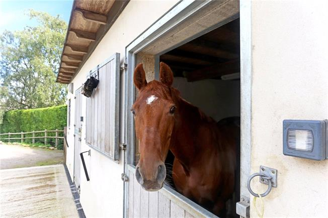 equestrian-stable